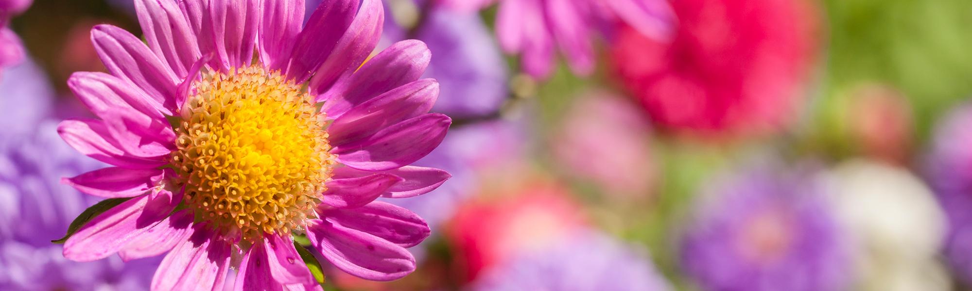 slider_pink_flower